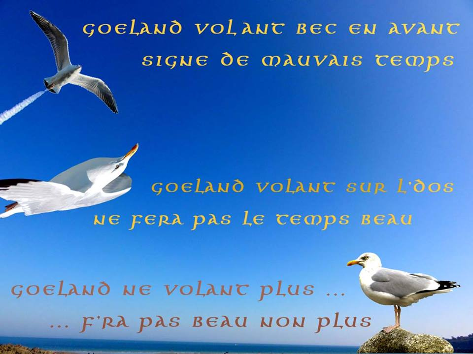 Dictons Marins Proverbes Et Citations Choisis Sur La Mer Et
